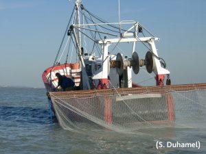 Photo - Prélèvement poisson (S. Duhamel - CSLN)