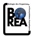 Logo-BOREA